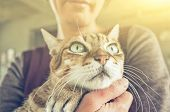 tabby fat cat held by a woman at home poster
