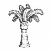 Palm Coastline Tropical Tree Monochrome Vector. Decorative Beautiful Trunk Palm. Paradise Wild Tropi poster