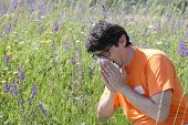 Man Allergic To Flowers Sneezing In A Field Of Purple Flowers poster