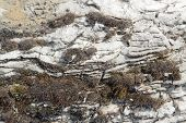 image of scant  - natural background with dry moss in clefty stone ambiance - JPG