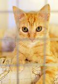 Close Up View Adorable Cute Ginger Cat In A Cage Behind Jail, Concept Of Animal Shelter, Care For Mi poster