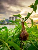 Snail Climbing On Plant In The Evening Beside The River Opposite Landmark Building Of Singapore At S poster