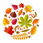 Flat Autumn Leaves. Colorful Fall Park Leaf Maple Elm Oak Chestnut, Geometric Flat Foliage. Round Fa poster