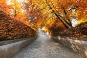 Natural Trees And Walkway At Public Park In Autumn, Beautiful Scenic  View Of Outdoor Garden Tree Pl poster