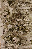 Moss Green Texture. Moss Background. Green Moss On Grunge Texture, Background poster