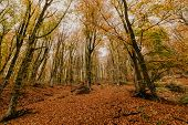 Beautiful Day In The Misty Autumn Forest With Creek poster