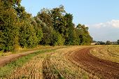 stock photo of loam  - The colorful field - JPG