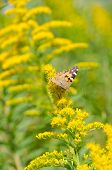 stock photo of goldenrod  - This is a photo of a brush - JPG