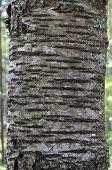 pic of arborist  - Close - JPG