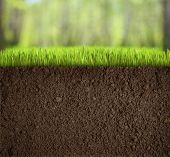stock photo of mud  - soil under grass in forest - JPG