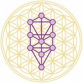 stock photo of hebrew  - The ten Sephirots of the Kabbalah fits in the Flower of Life - JPG