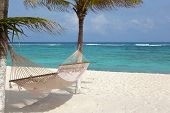 stock photo of bay leaf  - Idyllic beach with coconut trees and hammock at Mexico - JPG