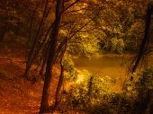 pic of moonlit  - Mysterious forest - JPG