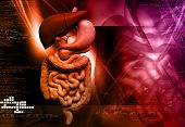 image of human stomach  - Digital illustration of human digestive system in colour background - JPG