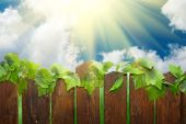 Sunny Day With Rural Fence poster
