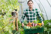 stock photo of aubergines  - Proud man presenting vegetables in a basket standing greenhouse - JPG