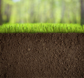 picture of underworld  - soil under grass in forest - JPG