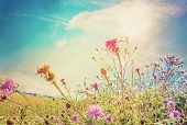 image of wildflowers  - beautiful view in summer flower  - JPG