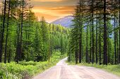 pic of snowy-road  - Drive through pine woods in Montana - JPG