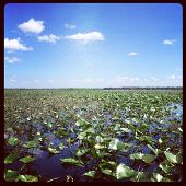 Everglades with filter effect - Instagram effect