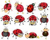 stock photo of ladybug  - Illustration of the cute ladybugs on a white background - JPG