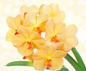 stock photo of yellow orchid  - Bright yelloww flowers of an orchid vanda on a yellow background - JPG