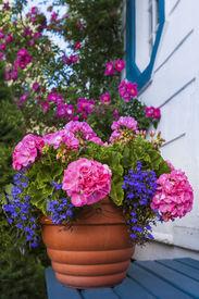 foto of lobelia  - A terracotta garden planter filled with geraniums and lobelia - JPG