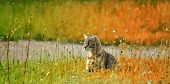 pic of tame  - Portrait of cat sitting on bright green grass - JPG