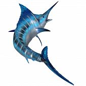 picture of game-fish  - The Blue Marlin is a predator and a favorite game fish of deep sea anglers - JPG