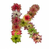 pic of piccolo  - bromeliad flower letter  isolated on white background - JPG