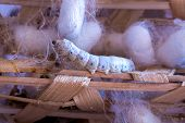 stock photo of silk worm  - Vietnam - JPG