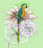 stock photo of parrots  - Vector sketch of a parrot with flowers - JPG
