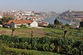 picture of dom  - View of the historic city of Porto with the Dom Luis bridge  - JPG