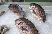 pic of piraeus  - Fish on ice in the market - JPG