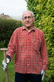 picture of spade  - Elderly man standing in garden wearing work clothes and holding spade - JPG