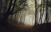 stock photo of trough  - Path trough dark forest with fog in late autumn