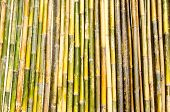 picture of log fence  - Fence made out of upright bamboo poles - JPG