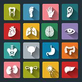 foto of flat stomach  - Set of vector Medical Icons with human organs in flat style with long shadows - JPG