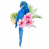image of parrots  - Beautiful vector image with nice watercolor blue parrots - JPG