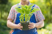 picture of pot plant  - Midsection of gardener holding potted plant at nursery - JPG
