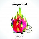 pic of exotic_food  - Watercolor dragon fruit  - JPG