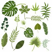 Tropical Leaves Green Jungle. Set Isolated Palm Exotic Leaf Plant Floral Hawaii Botany Decoration Bo poster