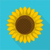 Round Sunflower Icon. Flat Illustration Of Round Sunflower Vector Icon For Web poster