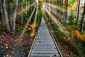 Boardwalk  in nature with sunrays poster