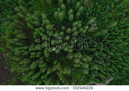 poster of Aerial Top View Forest, Texture Of Forest View From Above, Copter Drone View, Panoramic Photo Over T