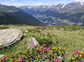In The Foreground Of The Picture The Last Alpine Roses Bloom, On The Mountain Meadow There Are Big S poster