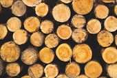 Stack Of Logs. Natural Wooden Background With Timber. Log Wall poster