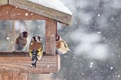 Beautiful Winter Scenery With European Finch Birds In The Bird House Within A Heavy Snowfall poster