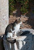 Постер, плакат: Кошка на закате в древний город