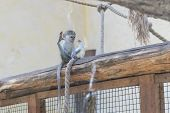Adorable Face Of Baby Asian Monkey. Young Monkey Sitting On An Old Log. Animal Care Concept. Baby An poster